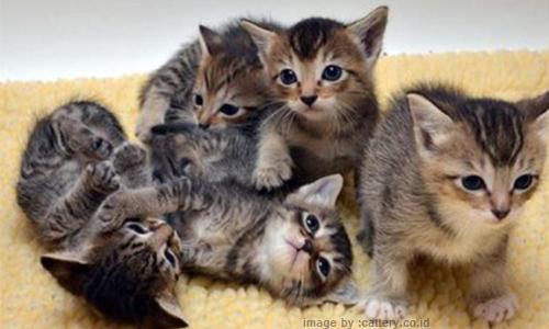 Tips dan Cara Merawat Kucing Agar Sehat dan Lincah ...